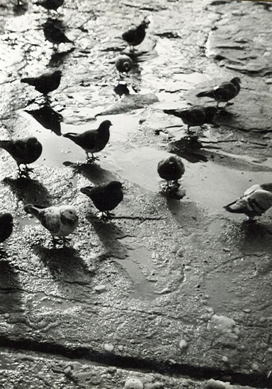 Seguro que muchos se acordarán de las palomas que comian a la puerta de la cantina, sobre todo el que les echaba la comida.