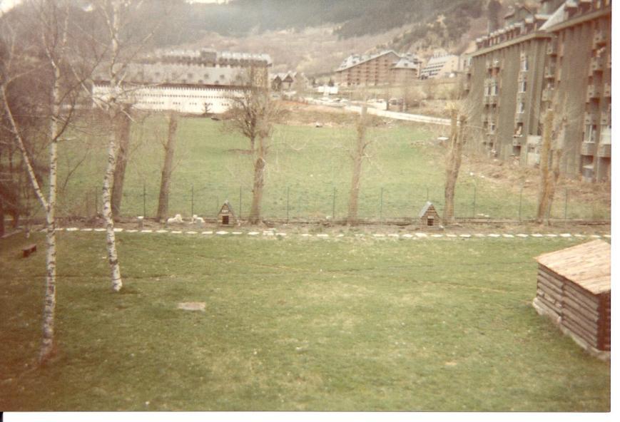 Lo perros rodeando el cuartel