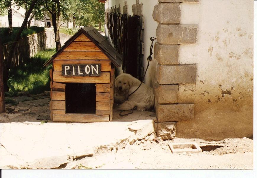 Adios Pilón, la de patas de pollo que te llegaste a zampar.
