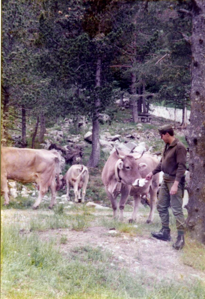 Alguno recordará que nuestra escuadra, se propuso ordeñar una vaca, y que tras una cruenta lucha con un ternero que envestia como un demonio, con varios heridos y vocaciones toreras fustradas, conseguimos un par de litros de leche, y que tras hervirlos, era tan grasa la leche, que se podia cortar con cuchillo y tenedor.