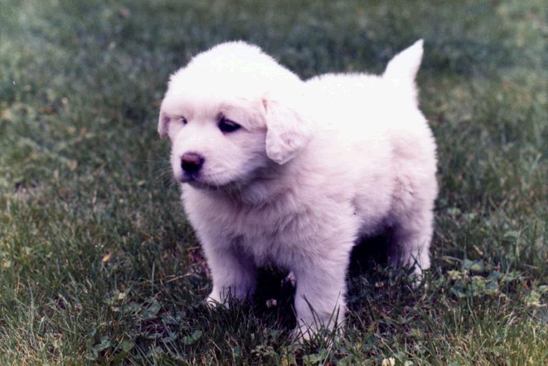 Precioso cachorro ¿Verdad?
