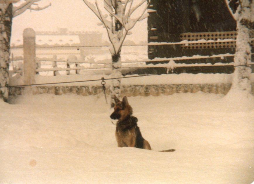 El sufrido Liak en la nieve